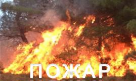 пословицы и поговорки о пожаре